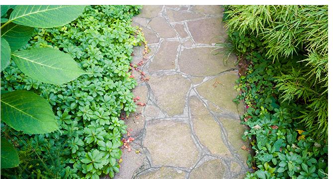 Growing Groundcovers at Menards®