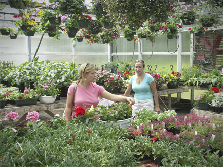 What to Look For When Purchasing Plants